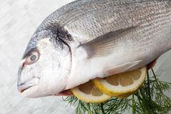 Bream Stock Images
