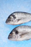 Bream Royalty Free Stock Photography