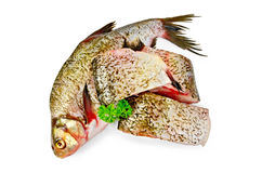 Bream raw with parsley Royalty Free Stock Photo
