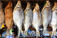 Bream river fish Royalty Free Stock Photography