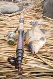 Bream 3 Royalty Free Stock Photography