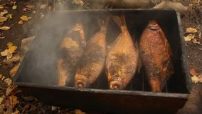 Bream smoke on alder cones with a delicious smell stock video