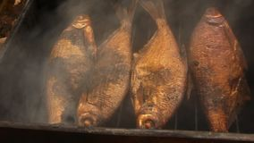 Bream smoke on alder cones with a delicious smell stock video footage