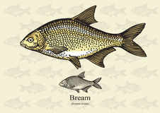 Bream. Royalty Free Stock Photos
