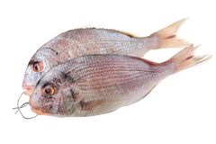 Bream. On the white background royalty free stock photography