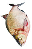 Bream on a white background Stock Photo