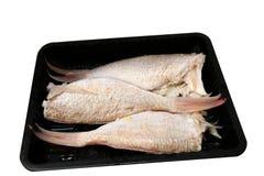 breamfiskthreadfin Royaltyfri Fotografi