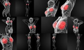 Breast anatomy x-ray. 3D rendering female breast anatomy x-ray stock photos