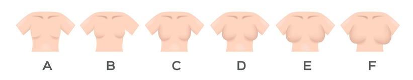 Brustgröße b