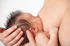 Breastfeeding baby Royalty Free Stock Image