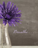 Breathe Royalty Free Stock Images