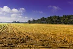 Breathtaking agriculture landscape Stock Photo