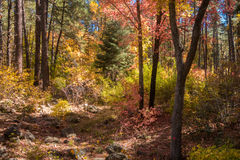 The Breathtaking Beauty and Serenity of Sedona Arizona. The Wonderful colors of a autumn day in the forest Royalty Free Stock Photography