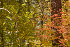 The Breathtaking Beauty and Serenity of Sedona Arizona. The Wonderful colors of a autumn day in the forest Stock Images