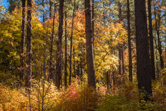 The Breathtaking Beauty and Serenity of Sedona Arizona. The Wonderful colors of a autumn day in the forest Royalty Free Stock Image