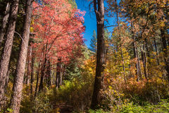 The Breathtaking Beauty and Serenity of Sedona Arizona. Wonderful colors of a autumn day in the forest Stock Photos