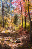 The Breathtaking Beauty and Serenity of Sedona Arizona. The Wonderful colors of a autumn day in the forest Stock Photo