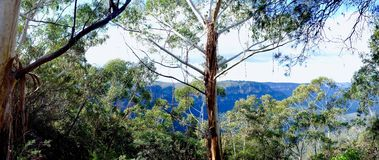 Breathtaking Czarowne Błękitne góry Australia Glimpsed Przez Gumowych drzew Fotografia Stock
