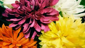 Breathtaking Flowers, colourfull Stock Images