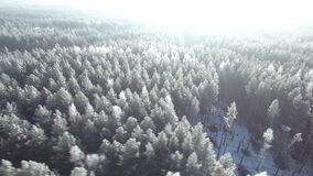 Aerial view of a winter forest. Nature ecology concept. Winter time, coziness, enjoying sunrise. Beautiful sunny day