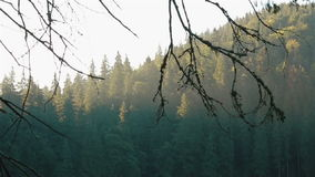 Breathtaking landscape of wooded Carpathian mountains in early morning. Tree branches on foreground stock video