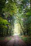 Breathtaking path in the forest, Europe Royalty Free Stock Images
