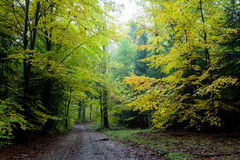 Breathtaking path in the forest in Poland Royalty Free Stock Photography