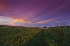 Free Breathtaking Red Sunset And Twilight Over Field Royalty Free Stock Images - 24236779
