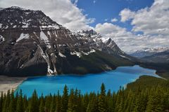 Peyto lake in Banff National Park. The breathtaking view of the turquoise Peyto lake was one of the most memorable place.  The Canadian Rocky's provided the Royalty Free Stock Photography
