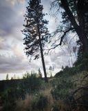 Brebaje de la lluvia Fotos de archivo libres de regalías