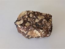 Breccia rock with angular particles. Beige sharp angular pieces of coarse grained pebble sediments sit in matrix of darker brown material.  Hand sample of crust stock images