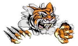 Brecha de la garra de la mascota del tigre Fotos de archivo libres de regalías