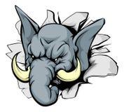 Brecha del elefante Imagenes de archivo