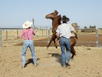 Brechen eines jungen Pferds Lizenzfreie Stockfotos