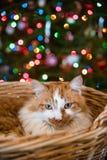 Brechen Sie die Ingwer Weihnachtskatze vor glühenden mehrfarbigen Lichtern ab stockbild