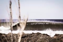 Brechende Welle hinter Baum lizenzfreie stockfotografie