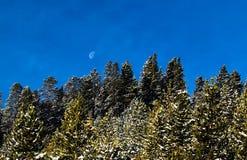 Breckenridge Colorado Half Moon. Trees covered with snow stock image