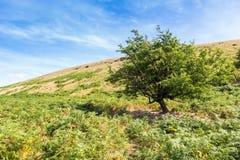 Brecon erleuchtet Naional-Park Stockbild
