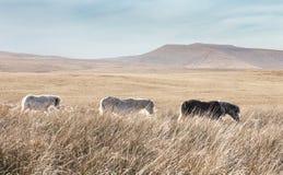 Brecon guida il parco nazionale in Galles, Regno Unito fotografie stock libere da diritti
