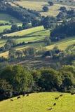 Brecon ilumina o parque nacional Wales Reino Unido Imagem de Stock