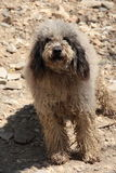 Bred breed dog. Portrait of bred breed dog Stock Photo