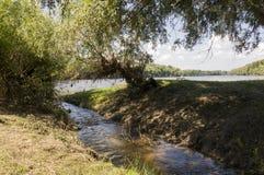 Bred flod och liten liten vik i sommaräng poppel ner som snö Juni juli Royaltyfri Bild