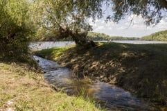 Bred flod och liten liten vik i sommaräng poppel ner som snö Juni juli Arkivbild