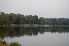 Bred flod som flödar över grön skognedgång afton Reflexioner av träd i det lugna vattnet sundown arkivfoto