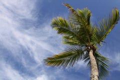 bred miami palmträd Arkivfoton