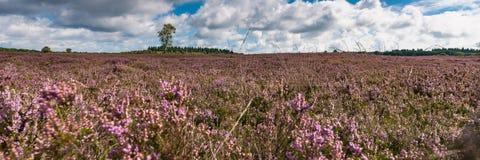 Bred panoramasikt över hedland arkivfoto