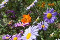 bred vinkelblick på färgrika blommor arkivbilder