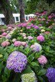 Bred vinkelsikt av blommorna i trädgården Royaltyfria Bilder