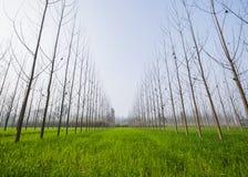 Bred vinkelsikt av ett grönt arkfält Royaltyfria Foton