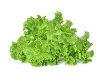 Breda smör på head grönsallat, det knapriga huvudet, isberget som isoleras på den vita backgroen royaltyfria foton